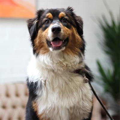 Photo of Calvin the dog