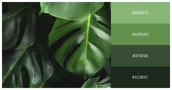 monochrome palette example