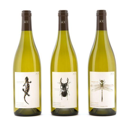 bug wine logo