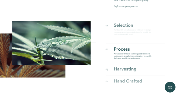 Doja Cannabis Website Interface