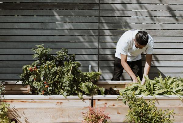 man landscaping and gardening