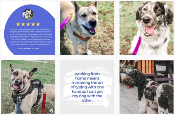dog walking business social media account