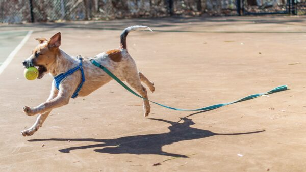 dog running away with leash
