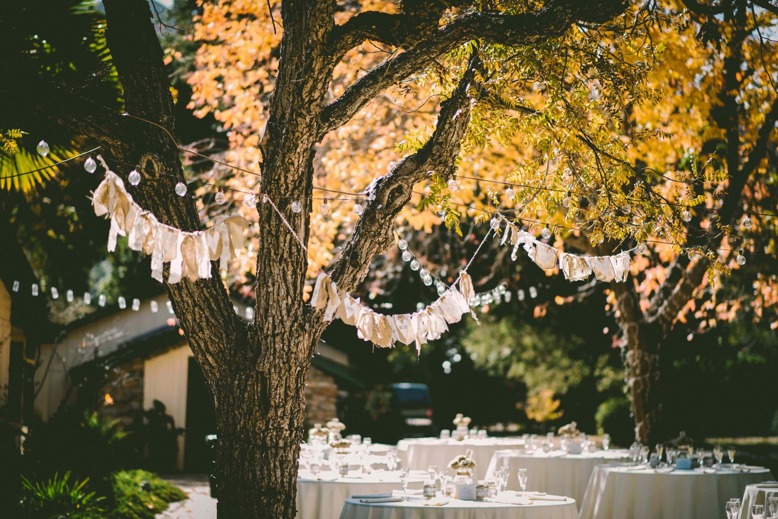 outdoor event under a tree